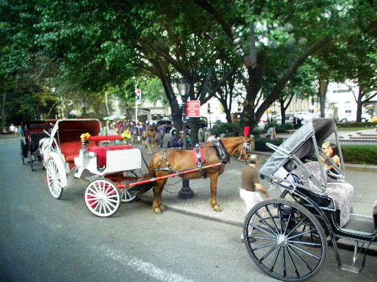 horse carriage rides picture of central park new york city tripadvisor. Black Bedroom Furniture Sets. Home Design Ideas