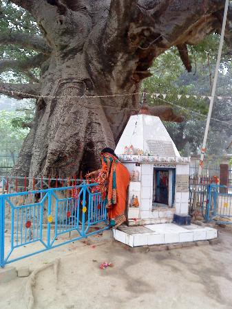 Parijaat Tree: Parijat  tree  trunk  which  looks  like  diifferent  god  from  different  angle