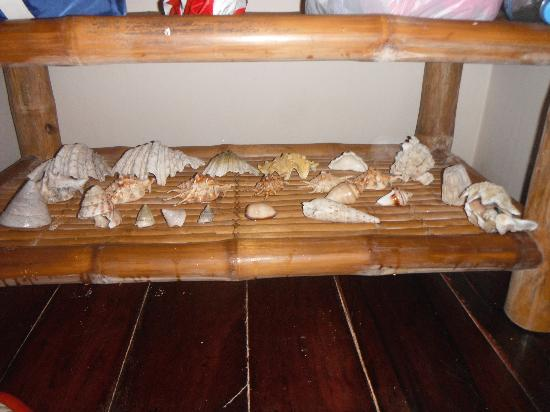 The Boardwalk at Cloud 9: Our Beach Shells on Room Table