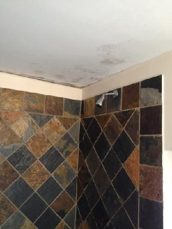Cape Diamond Hotel: it doesn't take much to treat mould- shows a lack of care to me?