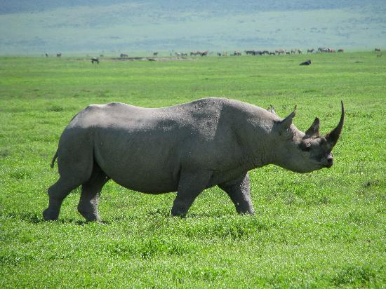 Ngorongoro Conservation Area, Tanzania: Where is a crossing guard when you ned one?