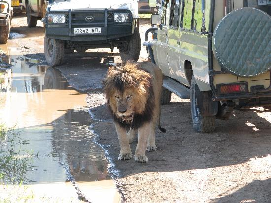 Ngorongoro Conservation Area, Tanzania: I need a drink!