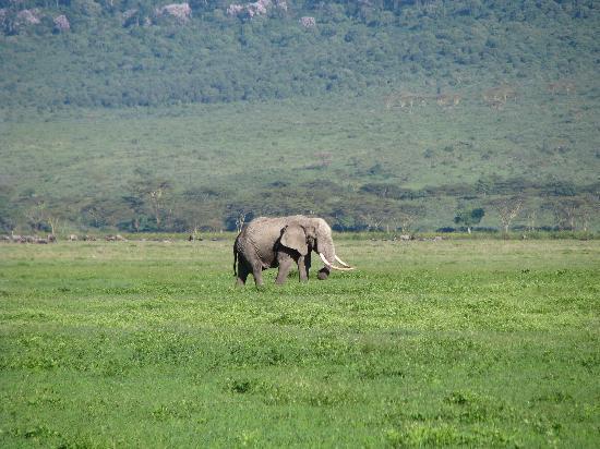 Ngorongoro Conservation Area, Tanzania: Tusker