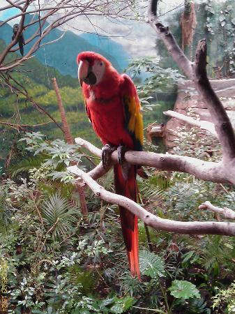 Faunia : bosque tropical