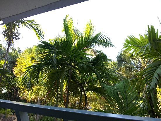 Couples Negril: View from our room.