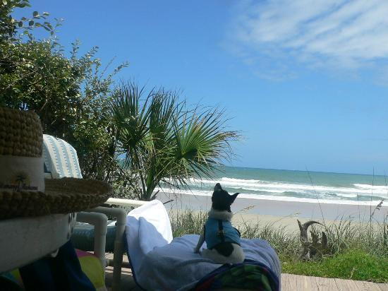 Suites on the Beach: Even our dog is enjoying her stay