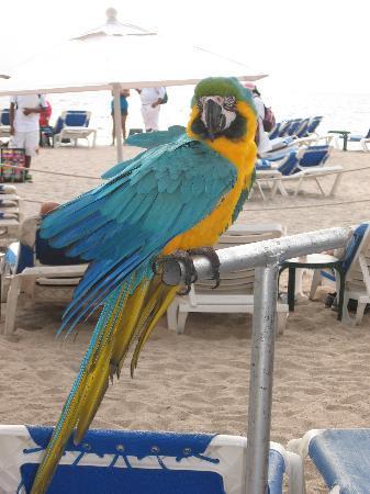 Friendly Vallarta All Inclusive Family Resort: Friendly