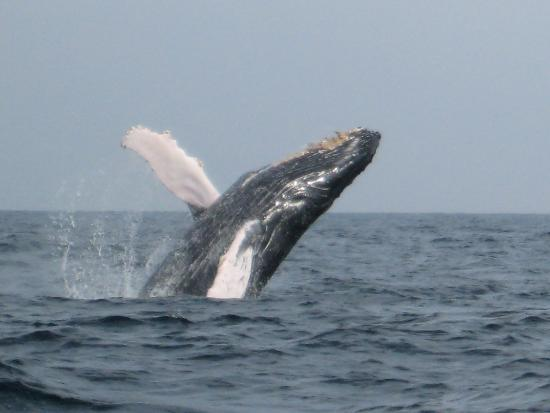Sayulita Entourage: Whale jumping