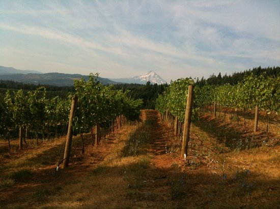Phelps Creek Vineyards: view from the vineyard