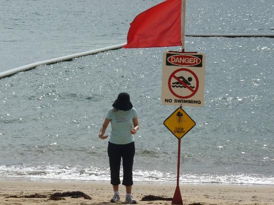 أوسايس آت بالم كوف: beach closed for a few days