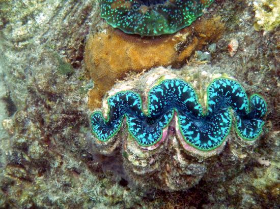 أوسايس آت بالم كوف: clams