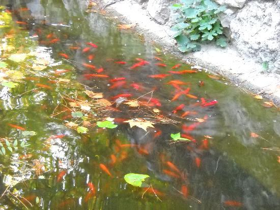 Estanque de los peces picture of parque de el capricho for Estanque de peces