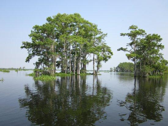 McGee's Landing - Atchafalaya Basin Swamp Tours