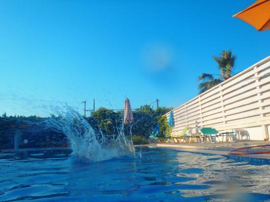 Seashell Apartments: the pool