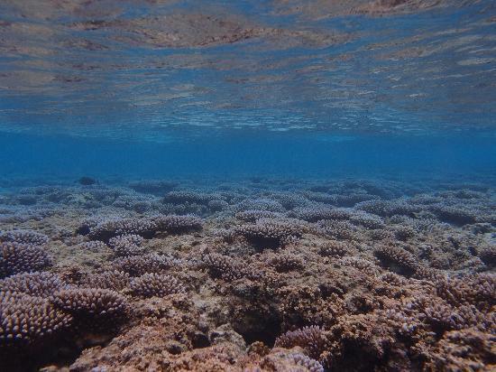 Obyan Beach : サンゴ