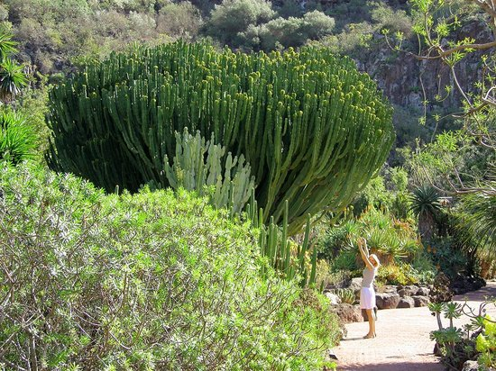 Jardin canario las palmas de gran canaria all you need for Jardin canario