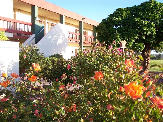Elephant Butte, NM: Roses in the Summer at the Inn
