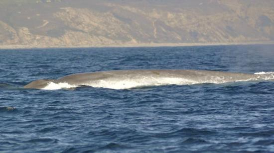 Redondo Beach Whale Watch Blue Whales Are