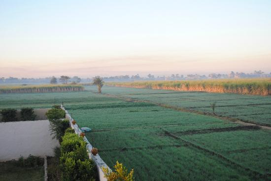 New Memnon Hotel: The morning fields of Luxor