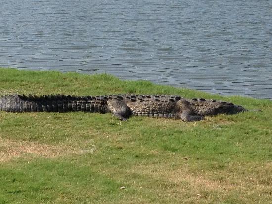 """Campo de Golf Ixtapa: Your friendly """"staff"""" member"""