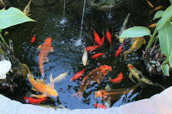 The Avalon Hotel: Koi Pond in the yard