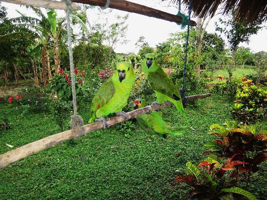 Finca Montania Sagrada: resident birds