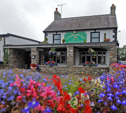 The Greyhound in bloom!