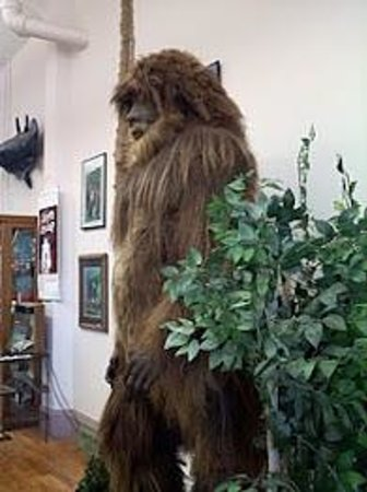 ‪International Cryptozoology Museum‬