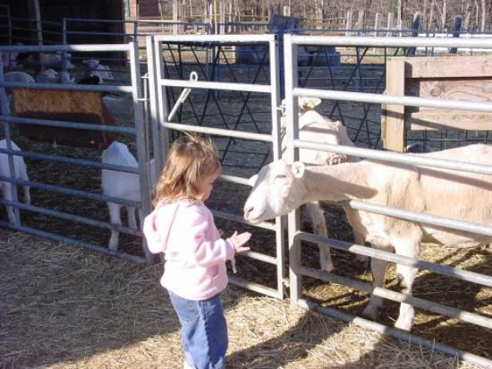 The Inn at East Hill Farm: Lynzie and the Goat
