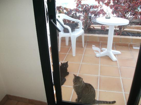 Hotel THB Flora : puss puss