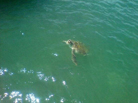 Playa de João Fernandez: tartaruga!!!