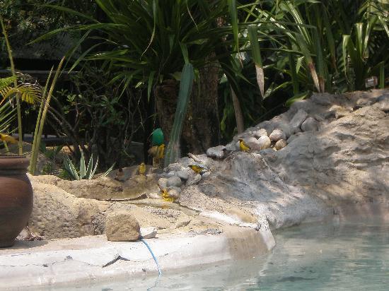 Wildebees Ecolodge: badderende vogels