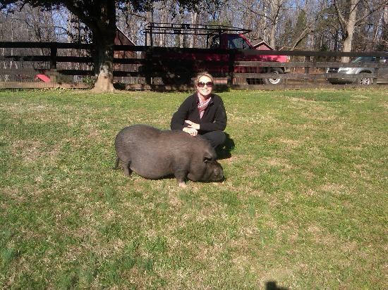 White Pig Bed and Breakfast: Friendly pig