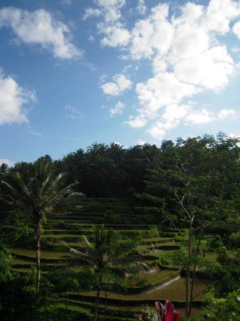 Balam Bali Villa: Just one of the multiple amazing sights during the walk with Hubert