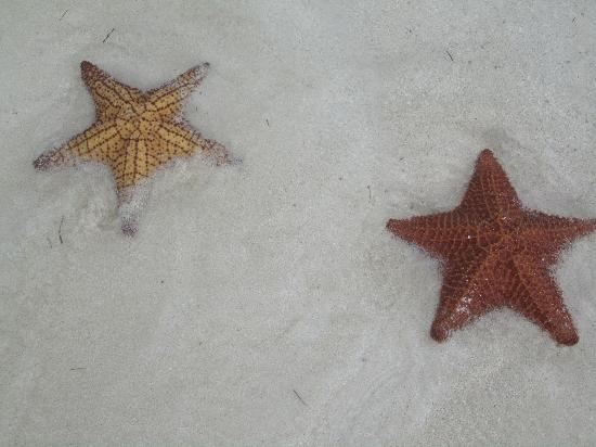 Sol Cayo Guillermo: Star Fish