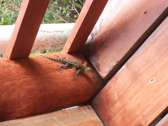 Cabinas Capulin: lizard
