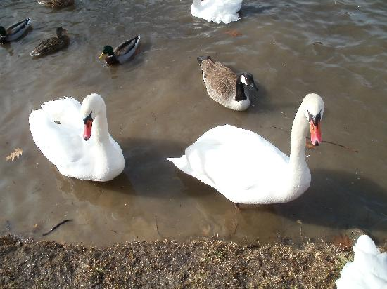 Buttermilk Falls Inn & Spa: The Swans