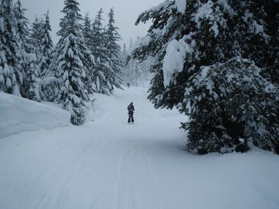White Pass Village Inn: Nordic Ski Trails are close by