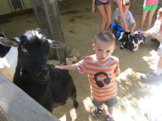 Dallas Zoo: Pedding