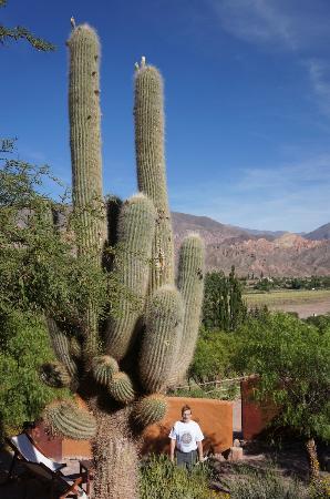 Cerro Chico : garden