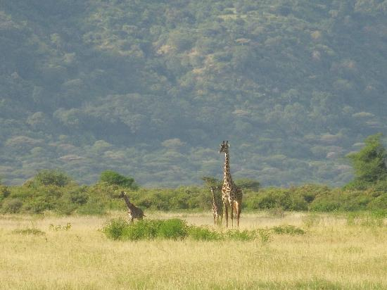 Lemala Manyara: view from the luxury camp