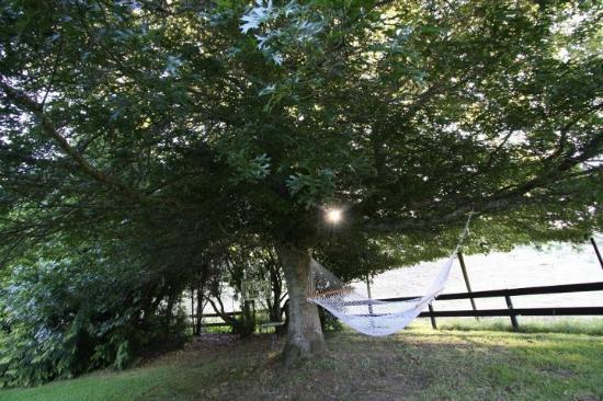 Hamurana Lodge : The hammock
