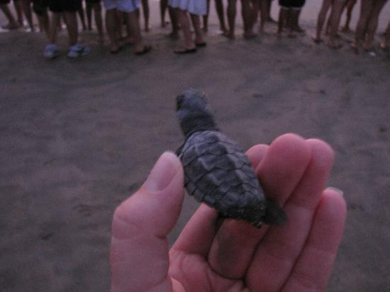 Barcelo Ixtapa: Releasing Baby Turtles