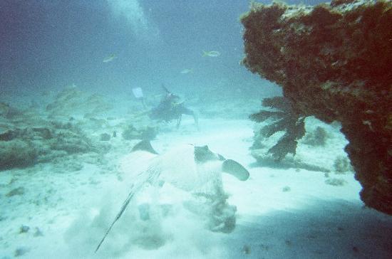 The Westin Resort & Spa, Cancun : diving