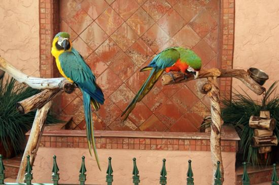 Inn at Cocoa Beach: Macaws
