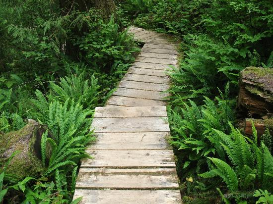 Red Crow Guesthouse: nearby pathway