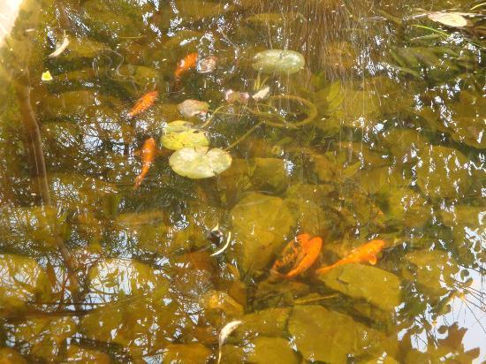 The Tree House Resort: Fish Pond