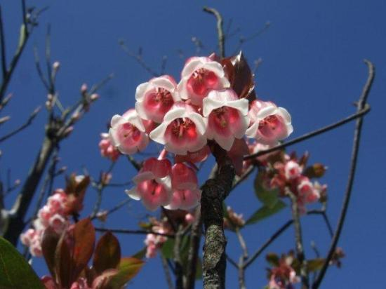 Hoi An Philong Tours - Day Tours: Chuang Flower found during CNY only :)