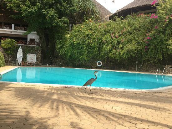 Leisure Lodge Beach and Golf Resort: Sitting by the Pango Pool the heron comes hunting for geckoes every morning and evening.