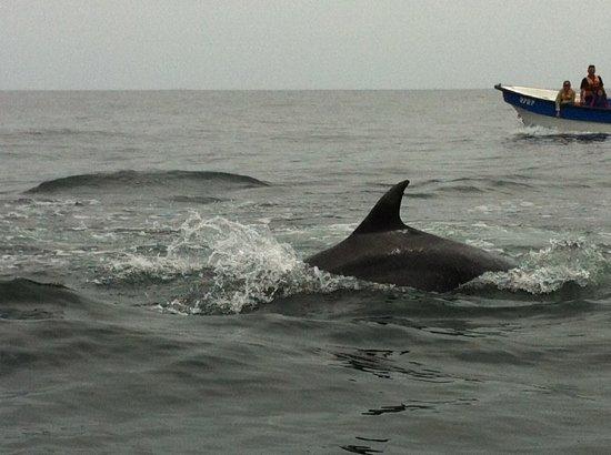 La Serena, شيلي: Delfines Punta de Choros